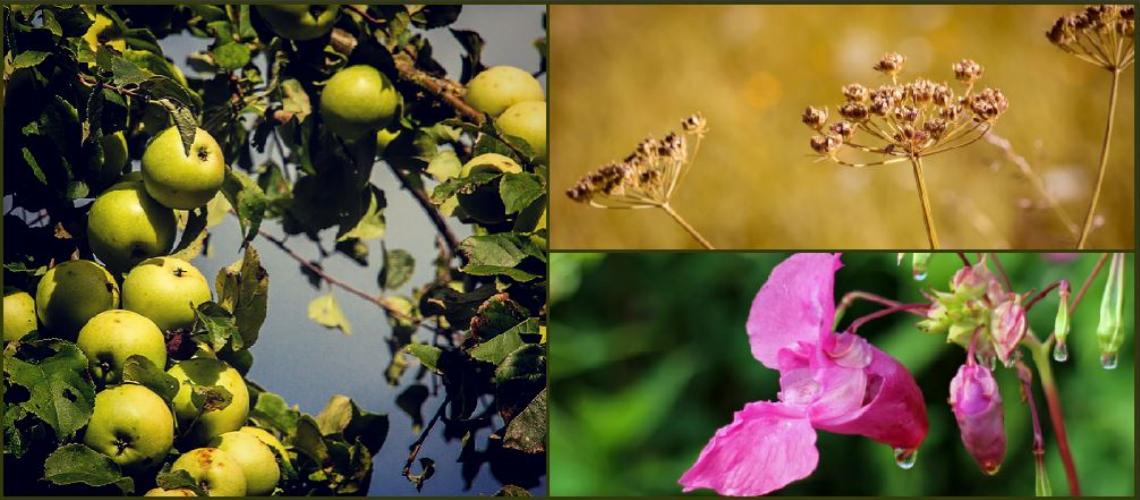 TicketEase - Sell Tickets Online - Foraging Walks at the Cider Festival, Bodiam