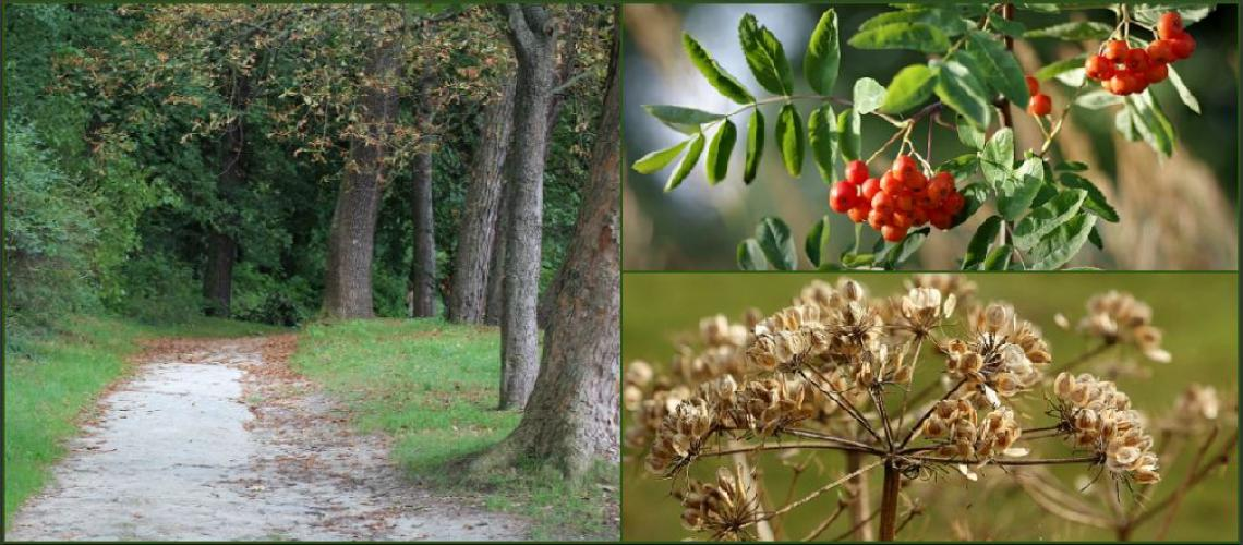 TicketEase - Sell Tickets Online - Foraging walk on Tunbridge Wells Common