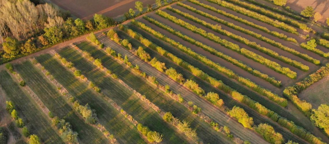 TicketEase - Sell Tickets Online - Introduction to Agroforestry @ Wakelyns Farm